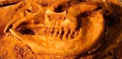 fossildisplay